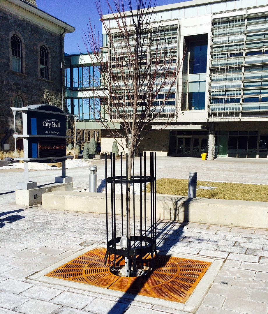 Cambridge tree grates